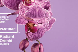 Radiant Orchid die Farbe des Jahres 2014 coloroftheyear